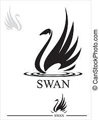 noir, swan., cygne