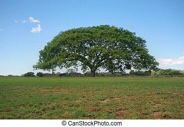 non-urbain, horizon, paysage., arbre, parfait