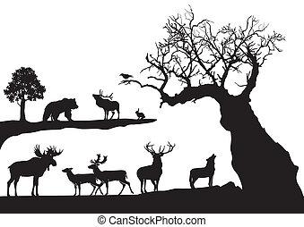noueux, arbre, vie sauvage, isolé