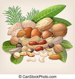 nourriture, écrou, illustration, cru, vecteur, collection, mix.