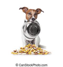 nourriture, affamé, cuvette chien