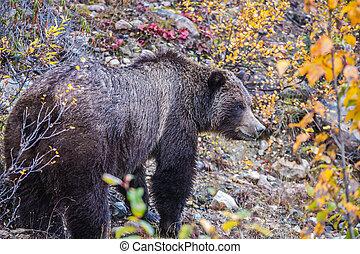 nourriture, forêt automne, ours, trouvé