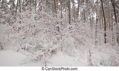 nous, déterminer, brindilles, because, forêt, tout, buissons, non, neige-couvert, voir, arbres, sous, noms, avoir, feuillage, presque, végétation, boîte, branches, hiver, impossible, however
