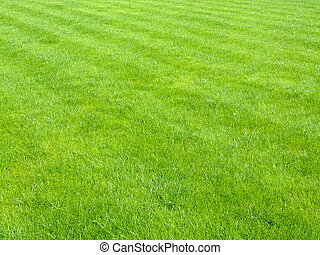 nouveau, football, herbe