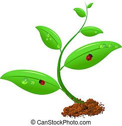 nouveau né, plante