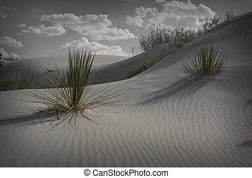 nouveau, sables blancs, mexique