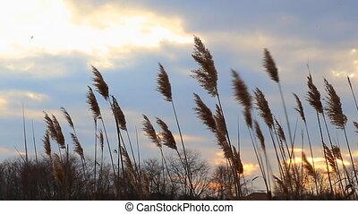 nuages, levers de soleil, ciel, sur, horizon