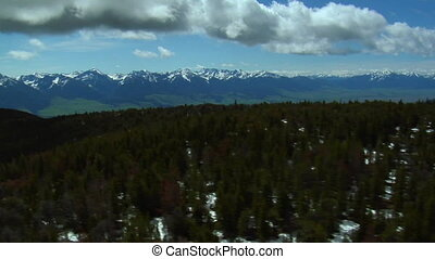 nuages, pins, sur, low-hanging, montana, vallée paradis