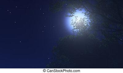 nuit, étoiles, 10