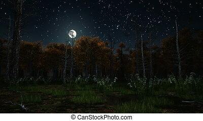 nuit, 4k, clair lune, effrayant, forêt, automne