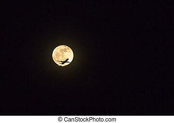 nuit, entiers, contre, voler, avion, silhouette, lune, sky.