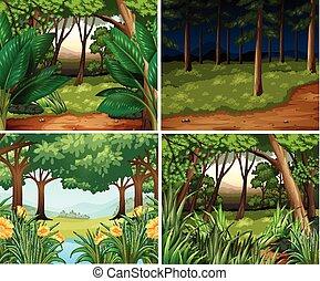 nuit, quatre, scènes, jour, forêt