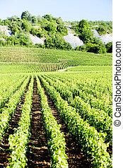nuits, de, france, vignobles, cote, bourgogne