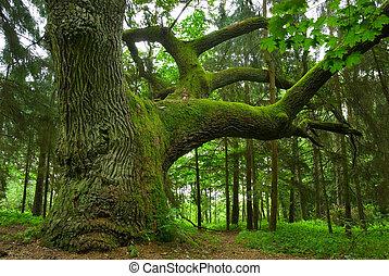 oak., grand