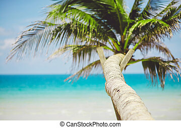 océan, exotique, paume, fond, brouillé, plage, vue