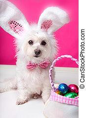 oeufs, oreilles, paques, chien, lapin