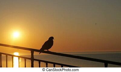 oiseau, balustrade