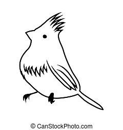oiseau, croquis