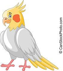 oiseau, dessin animé, mignon, cockatiel