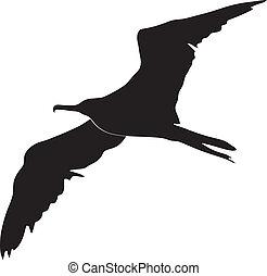 oiseau frégate