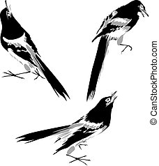 oiseau, illustration