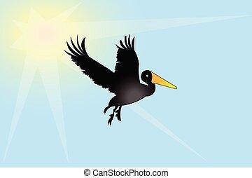 oiseau, pélican