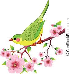 oiseau, printemps