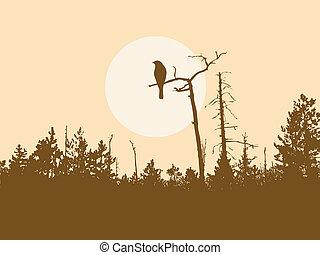 oiseau, silhouette, arbre