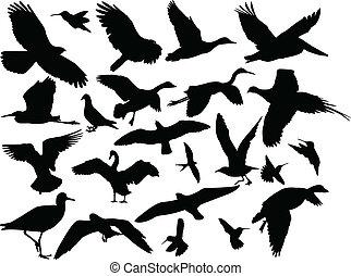 oiseau, vecteur, -, différent, collection