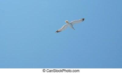 oiseau volant, sauver, planet., vivant, concept., sauvage, bleu, naturel, climat, urgence, idea., notre, voyage, au-dessus, liberté, mouette, high., animal, environment., sea.