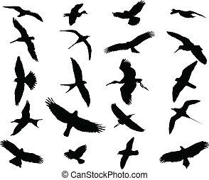 oiseaux, collection