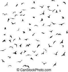 oiseaux, silhouette, mouettes, arrière-plan., vecteur, noir, blanc