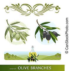 olive, branches, ensemble, vecteur, -