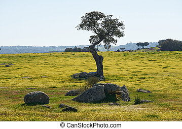 olive, paysage, seul, portugal, beau, jaune, arbre, alentejo, fleurs