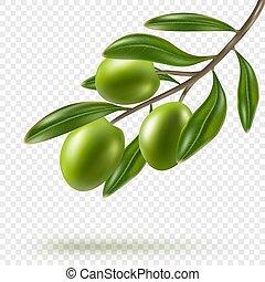 olives, branche, isolé, arrière-plan vert, olive, transparent