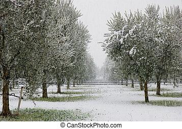 olivier, hiver
