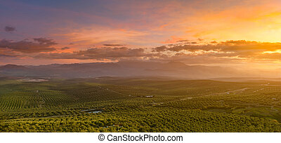 olivier, levers de soleil, paysage, espagnol