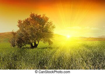 olivier, levers de soleil