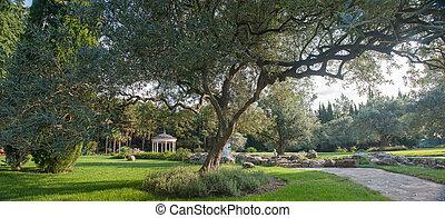 olivier, paysage