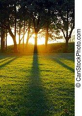 ombres, soleil, monture, coulage, arbre