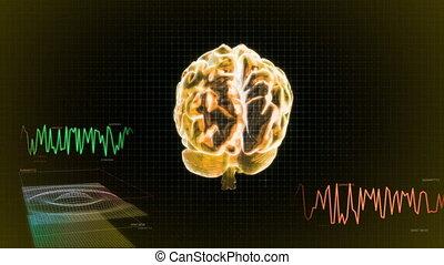 or, cerveau, 3d, écran, vague