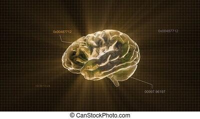 or, code, cerveau