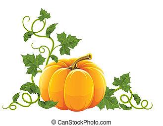 orange, mûre, légume, citrouille