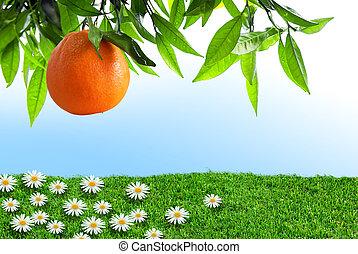 orange, printemps