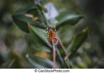 orange, toile, centre, macro, araignés
