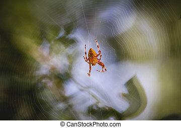 orange, toile, instruments à cordes, centre, araignés
