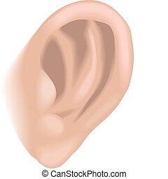 oreille, illustration