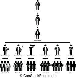 organisation, compagnie, arbre, diagramme
