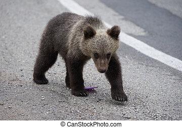 ours brun, petit