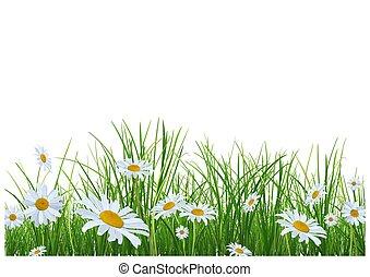 pâquerettes, fleurs, herbe